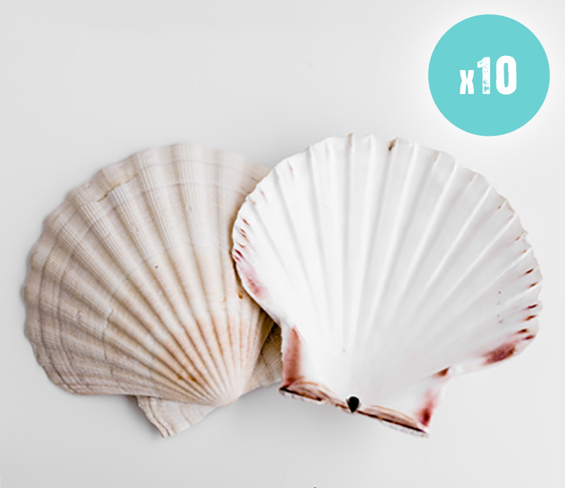 10 Clam shells