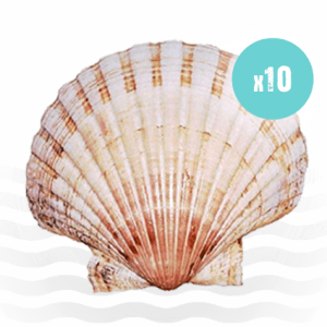 10 large shells